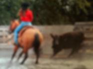 herkie cut cow_edited.jpg