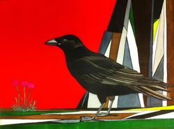 Raven, Pembrokeshire