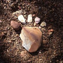 Nature Foot.jpg