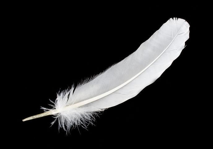 big white feather.jpg