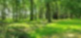 Screen Shot 2020-01-15 at 9.04.34 AM.png