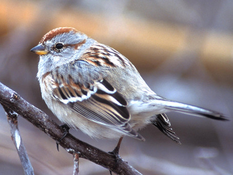 Winter birds come to Kansas City and find a home in our backyards