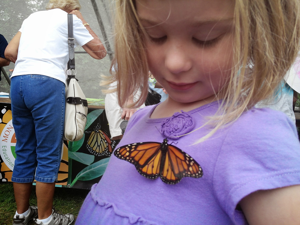 A monarch butterfly meets a new friend