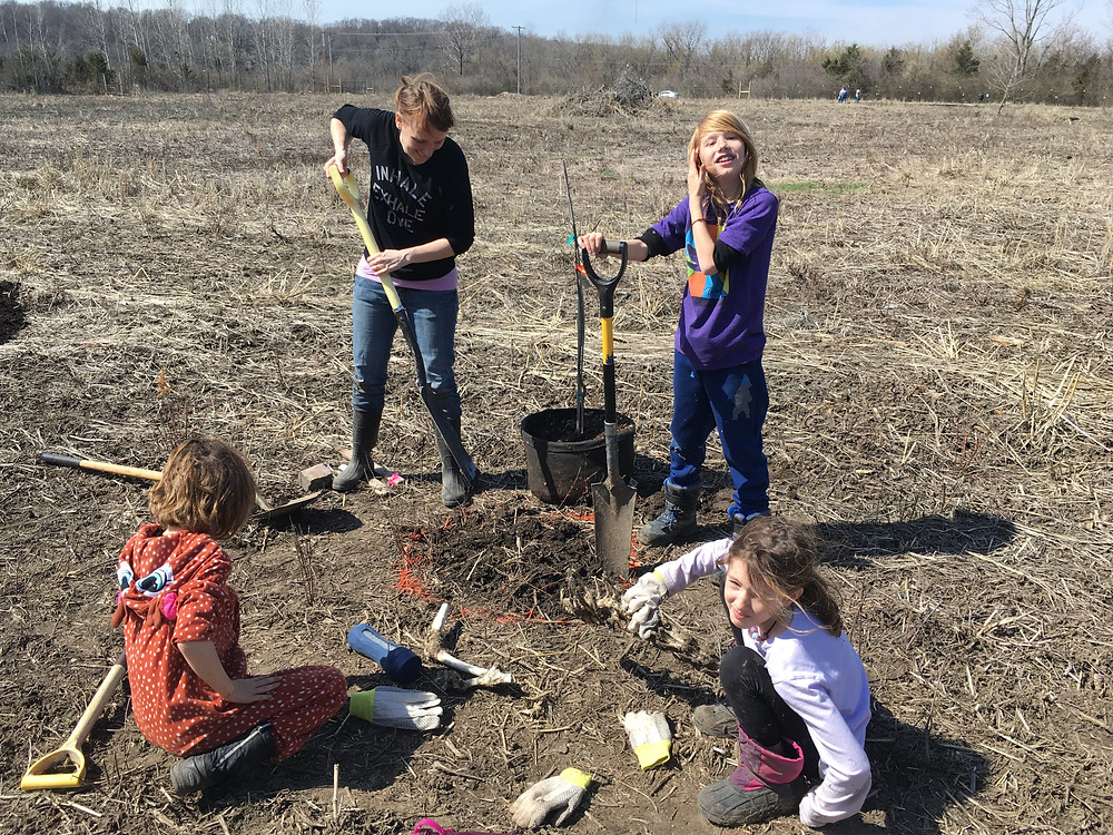 A group of volunteers are planting trees and digging holes with shovels.