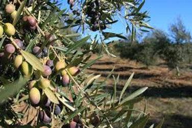 Cobrancosa Extra Virgin Olive Oil (Portugal)