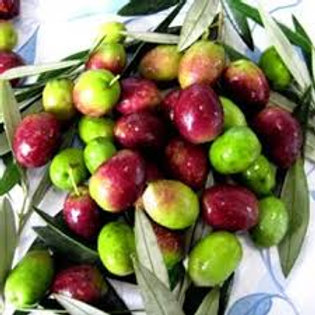 Malgerajo Picual Extra Virgin Olive Oil (Spain)