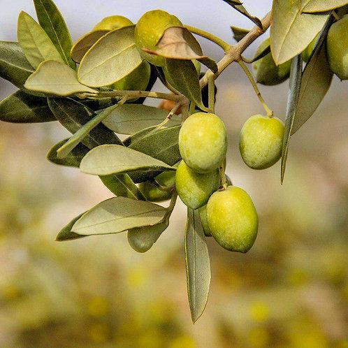 Biancolilla Extra Virgin Olive Oil (Italy)
