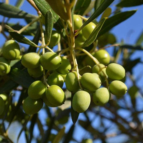 Favolosa Extra Virgin Olive Oil