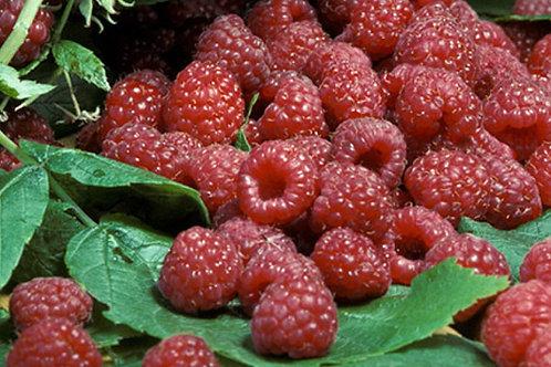 Cascadian Wild Raspberry