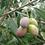 Thumbnail: Koroneiki Extra Virgin Olive Oil