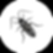 Дезинсекция, дезинсекция во Владимире, дезинсекция помещений, дезинсекция квартиры, дезинсекция  дезинфекция дератизация