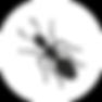 Дезинсекция, дезинсекция во Владимире, дезинсекция муравьев, дезинсекция квартиры, дезинсекция помещения, дезинсекция дезинфекция дератизация