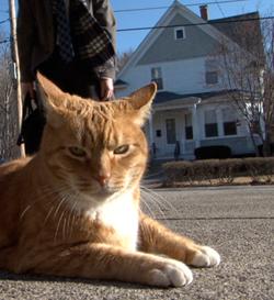 Cat Scratch the Movie
