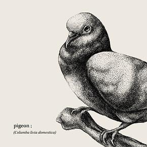 pigeonstipplednoborder.jpg