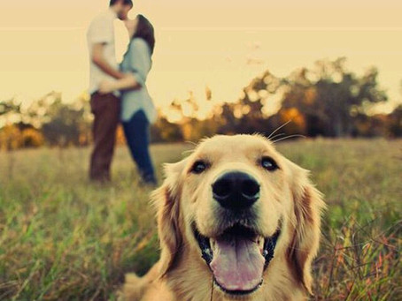 CANINE CONSIDERATION : Incorporating Your Pup Into Your Wedding