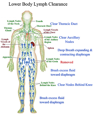 Lower Body Lymph Clearance.png