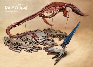 paleo, leather, leathersculptor, leathersculpture, plesiosaur, orthocone, kit, elasmosaurid, orthoceras, elasmosaurids, late, triassic, cretaceous, cambrian, paleoleather, paleoart, paleoartist, elasmosaurus, squid, nessie, art, leatherartist, diy, leatherkit, leatherworking, leatherfossil, extinct, fossil skeleton, prehistoric, art, sculpture, paleoart, skelosaurz, dinosaur, leatherwork, leathertoy, modelkit, dinosaurmodel, stemtoy, stem, naturaltoy, natural, toy, modeling, fossils