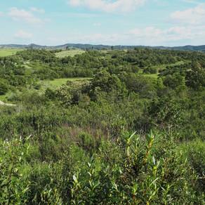 Plano de Gestão Florestal Sustentável