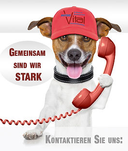 hund-telefon-stark.jpg