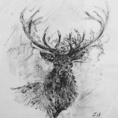 Stag with Ferns