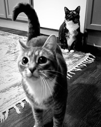 Louie and Luna
