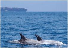 Ocean Conservation Society