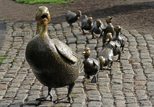 THE IMPORTANCE OF GOOD PROCESS:                    Do you get your ducks in a row?
