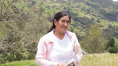 Margarita Ernestina Rivera Cambisaca es tejedora de Sombreros de Paja Toquilla (Panama Hats) y socia de MAKI FairTrade. Vive en Principal, Chordeleg, Azuay, Ecuador.