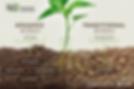 SoilLife5.webp
