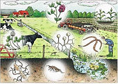 soil-cow-farmer.jpg