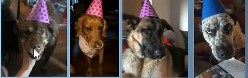 dogs%20with%20birthday%20hats_edited.jpg