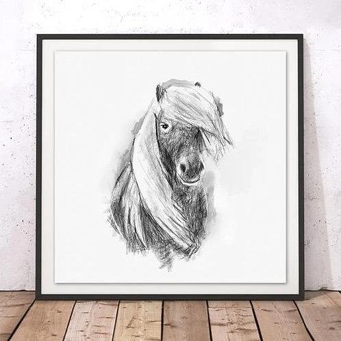 Marsha Luti - Shetland Pony Print