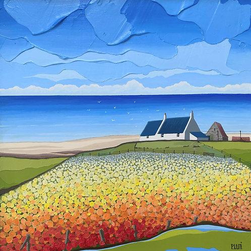 Peter Luti - Flowering Field
