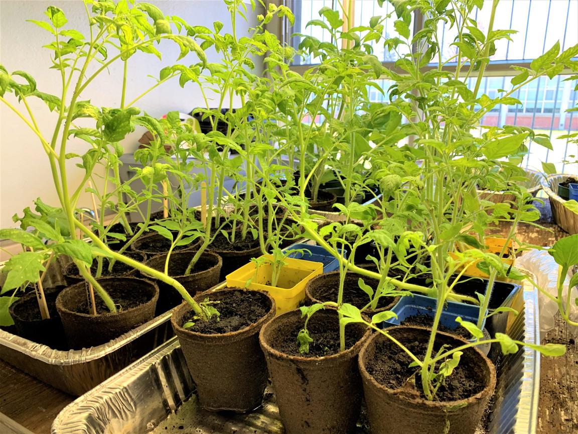 Horizon-Gardening-Seeding-2-10.jpg
