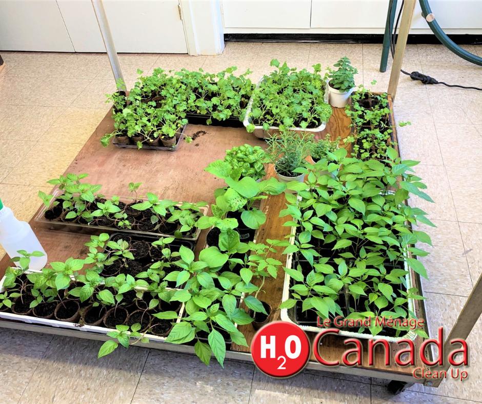 Horizon-Gardening-Seeding-10.png