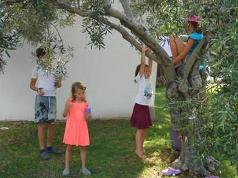 Zeytin ağacı evleri oldu.