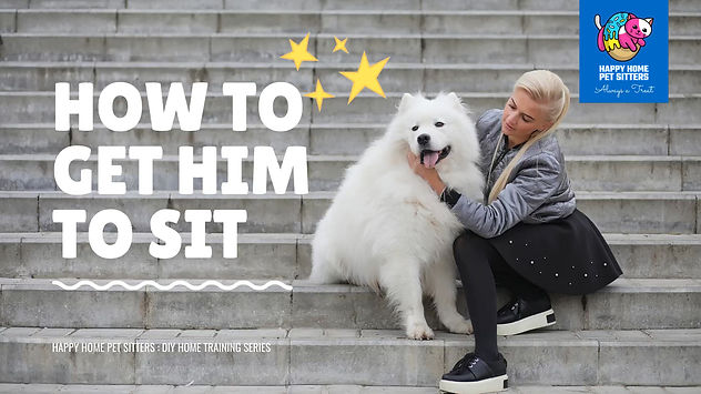 How-to-get-him-to-sit