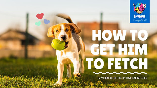 How-to-get-him-to-fetch