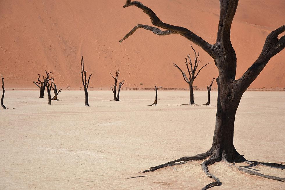 02. Namibia - Maximilien Photography.jpg