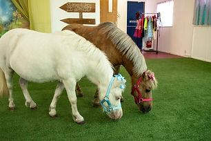 Two mini ponies