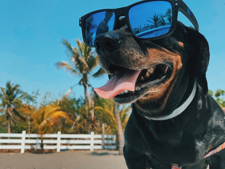 7 Fun Summer Activities to do with Your Dog