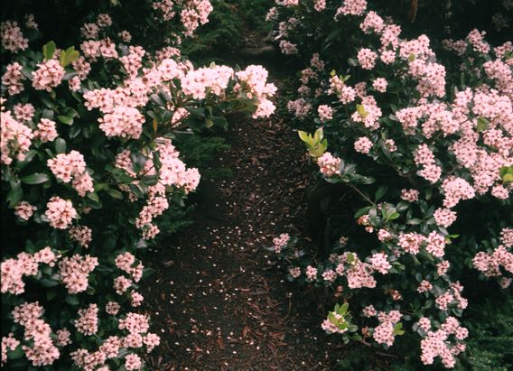 flowers for website.png