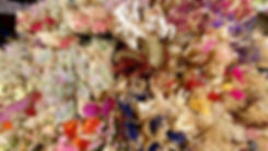 fiore-Lr-w230-studio---w230studio-3d--ar
