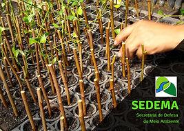 SEDEMA - Piracicaba / SP