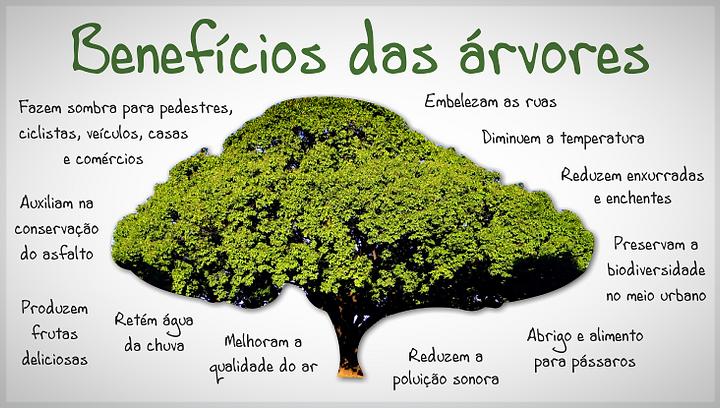 Arborização Urbana - Piracicaba / SP