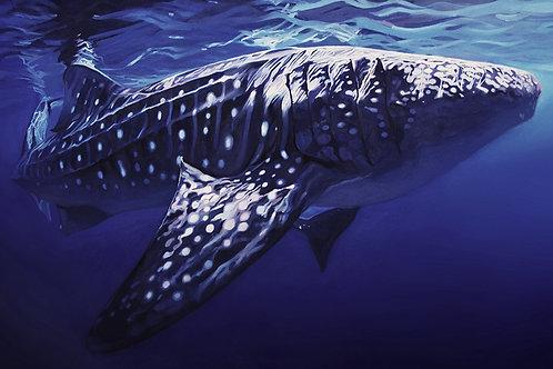 James Summerbell - Big Fish