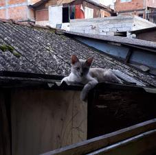 Gato doméstico deitado sobre a calha de uma palafita