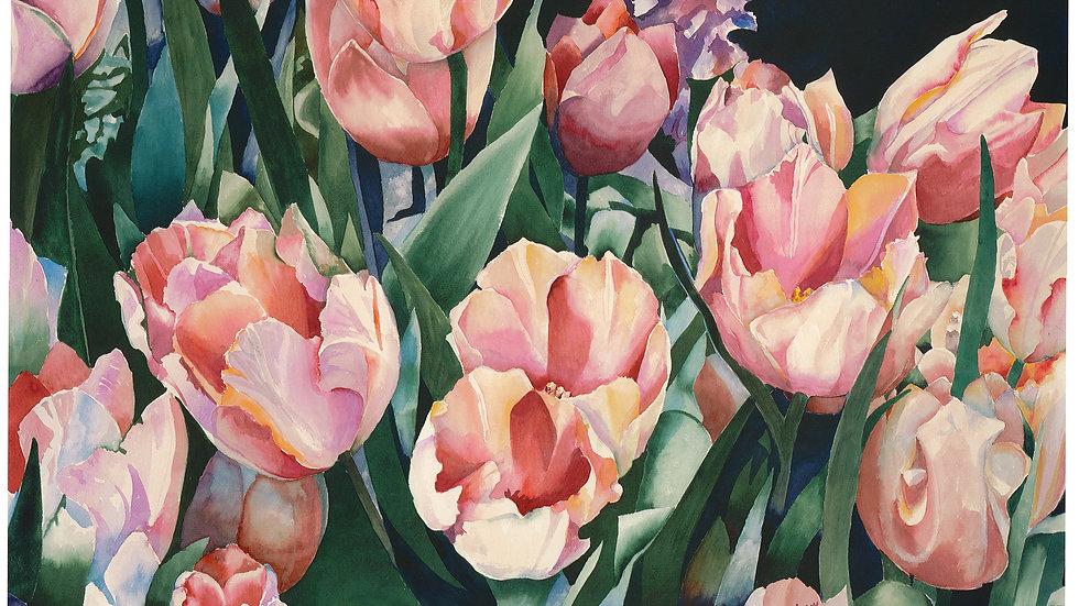 Sutterman's Tulips