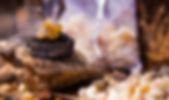 לבונה ~ קטורת מקודשת ~ Frankincense