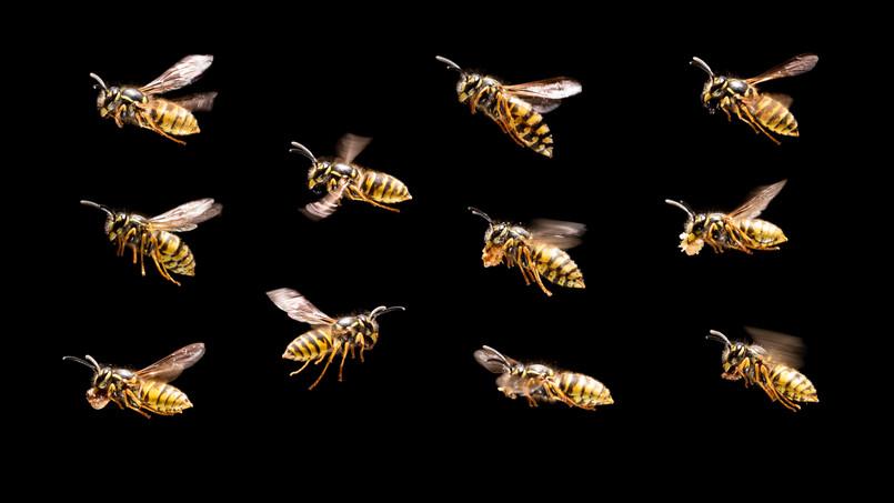 Wasps II